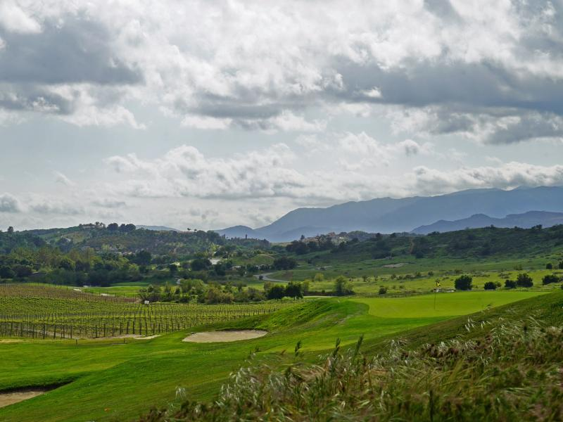 Vineyard and valley